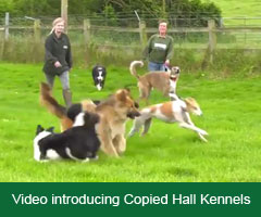 Introduction to Copied Hall Kennels