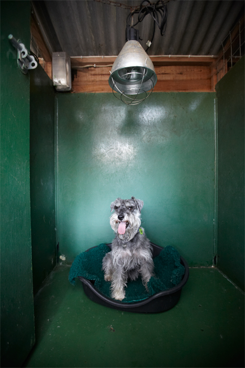 Copied Hall Kennels Gallery